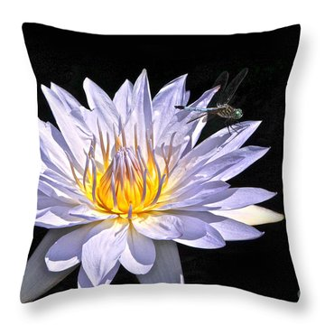 Summer Magic -- Dragonfly On Waterlily On Black Throw Pillow