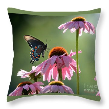 Summer Morning Light Throw Pillow by Nava Thompson