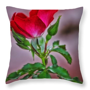 Summer Rose Throw Pillow by Thomas Woolworth