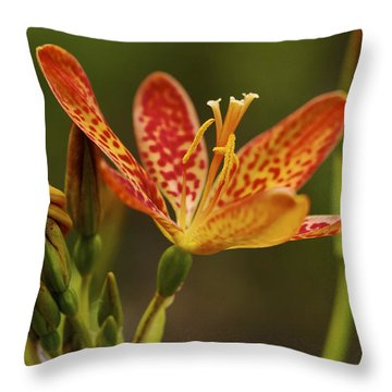 Summer Treat - Blackberry Lily Throw Pillow