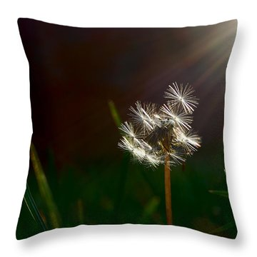 Sun Bathed Throw Pillow