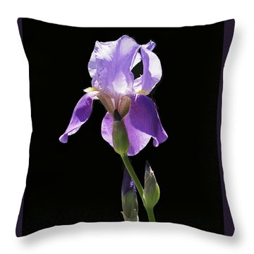 Sun-drenched Iris Throw Pillow by Rona Black