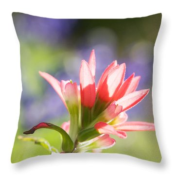 Sun Filled Paintbrush Throw Pillow