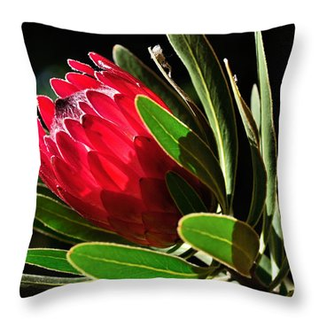 Sun-filled Protea Throw Pillow by Kaye Menner
