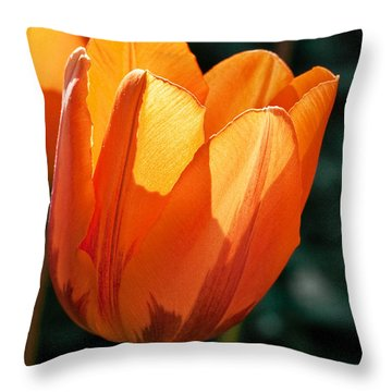 Throw Pillow featuring the photograph Sun Kissed Tulip by Barbara McMahon