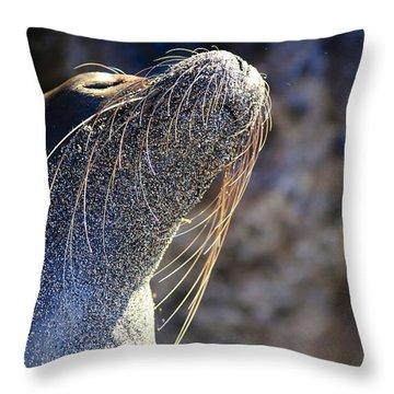 Sunbathing Galapagos Sea Lion Throw Pillow