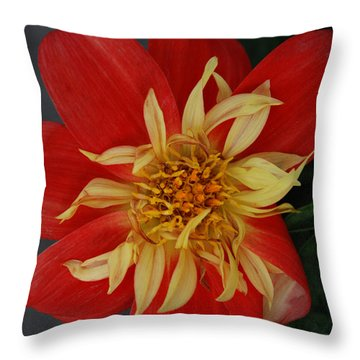 Sunburst Throw Pillow by Carol  Eliassen