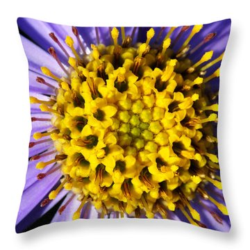 Sunburst Throw Pillow by Wendy Wilton