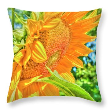 Sunflower 2 Throw Pillow by Rod Wiens