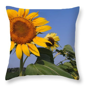 Sunflower Blues Throw Pillow by Frozen in Time Fine Art Photography