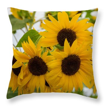 Sunflower Bouquet Throw Pillow by Patricia Schaefer