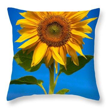 Sunflower Throw Pillow by Carsten Reisinger