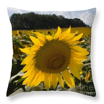 Throw Pillow featuring the photograph Sunflower Field by Chris Scroggins