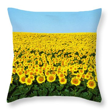 Sunflower Field, North Dakota, Usa Throw Pillow