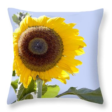 Sunflower In The Blue Sky Throw Pillow by David Millenheft
