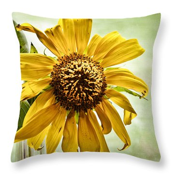 Sunflower In Window Throw Pillow by Greg Jackson