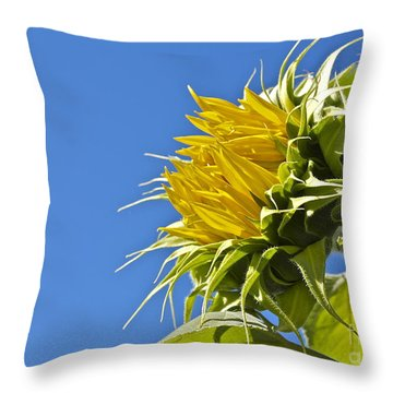 Throw Pillow featuring the photograph Sunflower by Linda Bianic