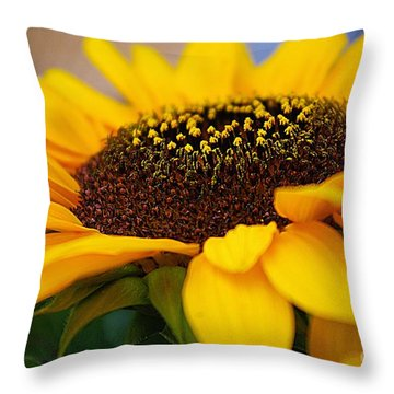 Throw Pillow featuring the photograph Sunflower Portrait Two by John S