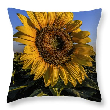 Sunflower Throw Pillow by Rob Graham