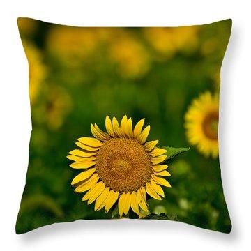 Sunflower Summer Throw Pillow by Christopher L Nelson