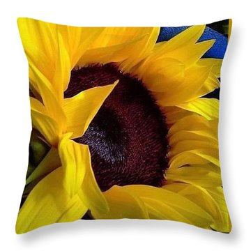 Sunflower Sunny Yellow In New Orleans Louisiana Throw Pillow by Michael Hoard
