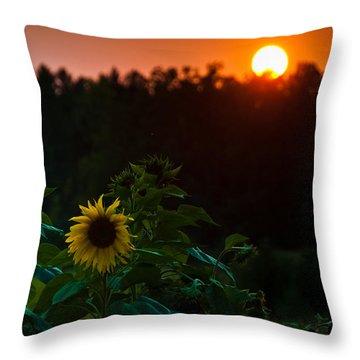 Throw Pillow featuring the photograph Sunflower Sunset by Cheryl Baxter
