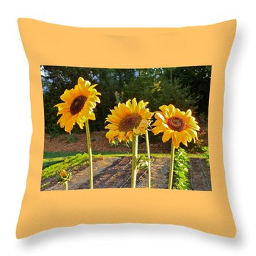 Sunflower Trio Throw Pillow by K L Kingston