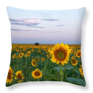 Sunflowers At Sunrise Throw Pillow