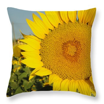 Sunflowers In Arezzo Throw Pillow