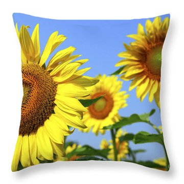 Sunflowers In Field Throw Pillow by Elena Elisseeva
