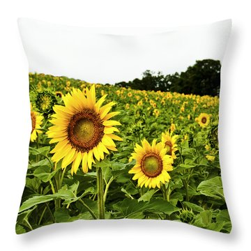 Sunflowers On A Hill Throw Pillow
