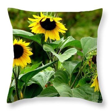 Throw Pillow featuring the photograph Sunflowers by Rose Santuci-Sofranko
