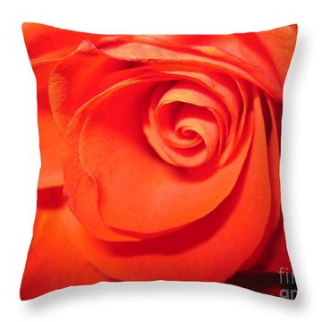 Sunkissed Orange Rose 9 Throw Pillow