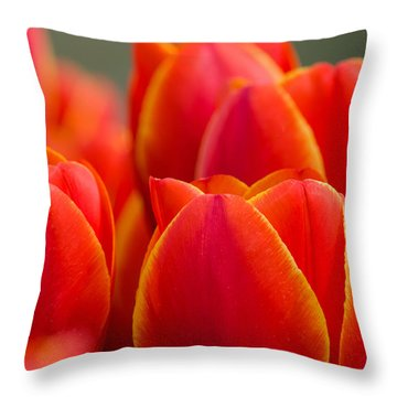 Sunkissed Tulips Throw Pillow by Jordan Blackstone