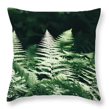 Throw Pillow featuring the photograph Sunlight And Shadows-algonquin Ferns by David Porteus