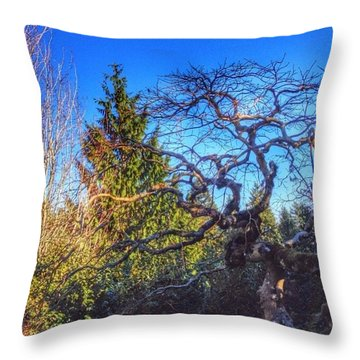 Sunlight On Twisted Branches With A Throw Pillow