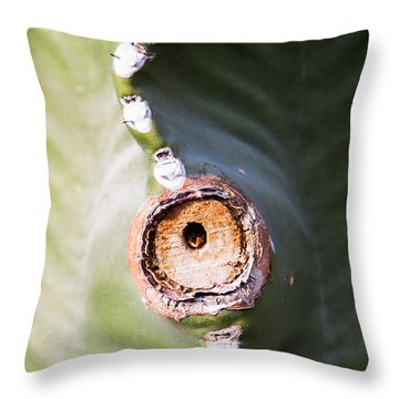 Sunlight Split On Cactus Knot Throw Pillow