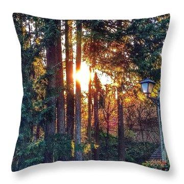 Sunlight Through Douglas Fir Trees Throw Pillow