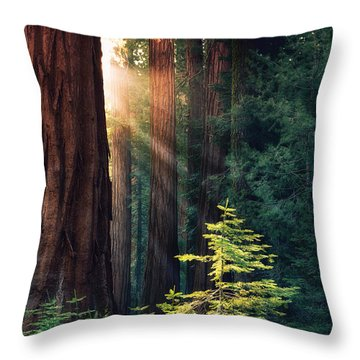Sunlit From Heaven Throw Pillow
