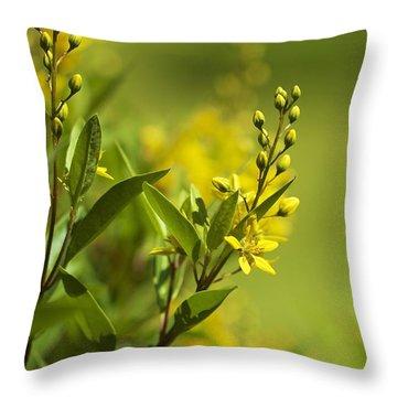 Sunlit Throw Pillow