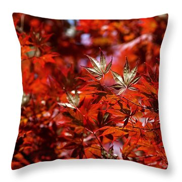 Throw Pillow featuring the photograph Sunlit Japanese Maple by Rona Black