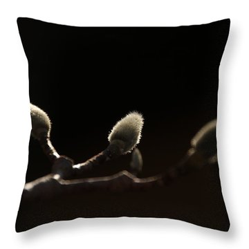 Sunlit Magnolia Buds Throw Pillow