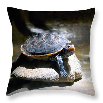 Sunning Terrapin Throw Pillow