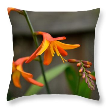 Sunny Crocosmia Throw Pillow by Scott Lyons