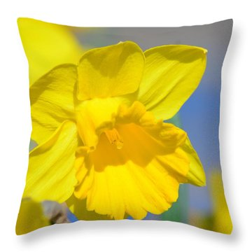Sunny Days Of The Daffodil Throw Pillow by Maria Urso