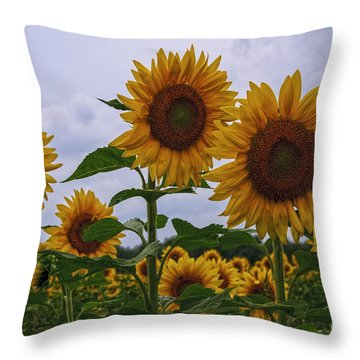 Throw Pillow featuring the photograph Sunny Faces by Debra Fedchin
