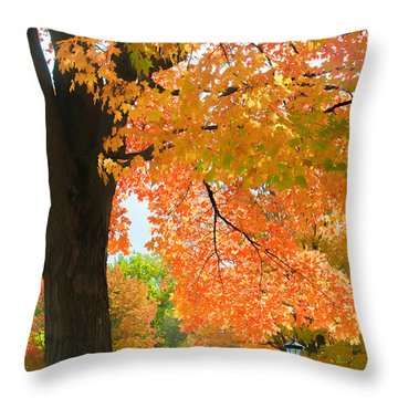 Sunny Fall Day By David Lawrence Throw Pillow