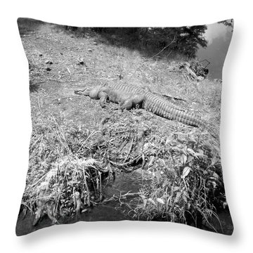 Throw Pillow featuring the photograph Sunny Gator Black And White by Joseph Baril
