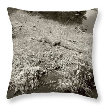 Throw Pillow featuring the photograph Sunny Gator Sepia  by Joseph Baril