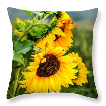 Sunny Meadow 1 Throw Pillow by Jenny Rainbow